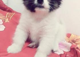 寻狗启示,奥利奥,快点回家了!,它是一只非常可爱的宠物狗狗,希望它早日回家,不要变成流浪狗。