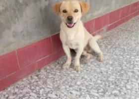 寻狗启示,山西省运城市盐湖区安邑周家坡村一千元寻找爱犬,它是一只非常可爱的宠物狗狗,希望它早日回家,不要变成流浪狗。