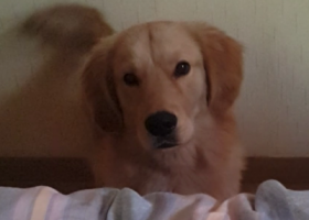 寻狗启示,寻找爱狗毛毛回家,望知情的好心人和收留它的好心人速速与我联系!,它是一只非常可爱的宠物狗狗,希望它早日回家,不要变成流浪狗。
