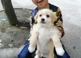 寻狗启示,帮钟子权找我的小狗威威,它是一只非常可爱的宠物狗狗,希望它早日回家,不要变成流浪狗。