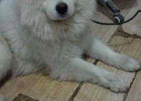 寻狗启示,已找到失主,它是一只非常可爱的宠物狗狗,希望它早日回家,不要变成流浪狗。