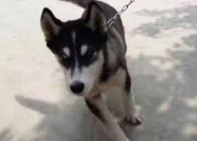 寻狗启示,家里的狗走丢了,求大家帮忙!!!!!!!!,它是一只非常可爱的宠物狗狗,希望它早日回家,不要变成流浪狗。