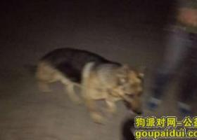 寻狗启示,失主认领成年德牧一条,它是一只非常可爱的宠物狗狗,希望它早日回家,不要变成流浪狗。