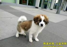9各位新年快乐,我亲爱的狗2016年2月7号在天津  南开区  宜宾里  丢了,各位帮帮忙