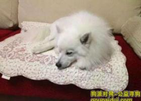 寻银狐狗  酬金3000元