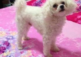 寻狗启示,3000元寻找爱犬回家,希望好心人留意!,它是一只非常可爱的宠物狗狗,希望它早日回家,不要变成流浪狗。