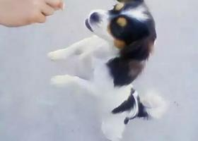 寻狗启示,寻找狗狗,请大家看见后帮忙转发朋友圈,QQ空间,或者微博都可以!,它是一只非常可爱的宠物狗狗,希望它早日回家,不要变成流浪狗。