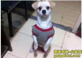 哈尔滨寻找爱犬望好心人帮忙,谢谢啦