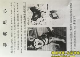 寻狗启示,连云港市东海县重金寻狗!!帮找到狗就给钱!拜托大家了!帮帮忙!,它是一只非常可爱的宠物狗狗,希望它早日回家,不要变成流浪狗。