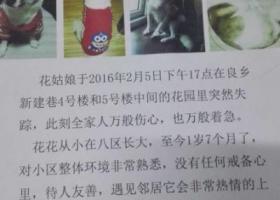 北京 房山区良乡镇新建巷重金寻找爱犬