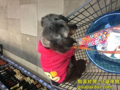 郴州找狗,狗狗在离广东离乐昌收费站20公里走丢了,它是一只非常可爱的宠物狗狗,希望它早日回家,不要变成流浪狗。