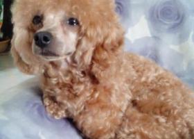 寻狗启示,拜求大家寻狗3000元酬谢,它是一只非常可爱的宠物狗狗,希望它早日回家,不要变成流浪狗。