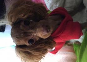 寻狗启示,找到狗了,它是一只非常可爱的宠物狗狗,希望它早日回家,不要变成流浪狗。