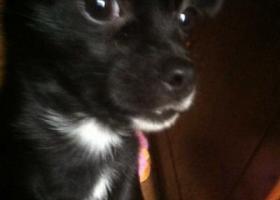 黑色小狗在昆山友谊医院附近丢失,请好心人帮忙寻找