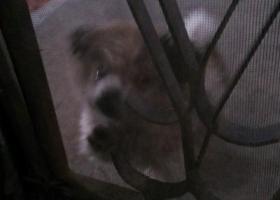 寻找一只不到一岁的狗狗,很可爱