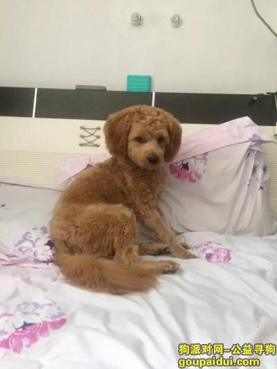 咸宁丢狗,湖北咸宁燕厦服务区丢狗 找到 重金酬谢,它是一只非常可爱的宠物狗狗,希望它早日回家,不要变成流浪狗。
