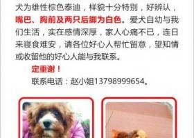 寻狗启示,#寻找2月14日遗失的爱犬 肥三#,它是一只非常可爱的宠物狗狗,希望它早日回家,不要变成流浪狗。