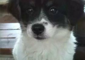 寻狗启示,2月12日晚在德阳西外街丢失,它是一只非常可爱的宠物狗狗,希望它早日回家,不要变成流浪狗。