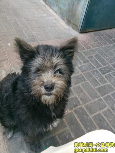 白城寻狗网,寻找爱犬重金酬谢,谢谢各位好心人,它是一只非常可爱的宠物狗狗,希望它早日回家,不要变成流浪狗。