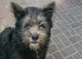 寻狗启示,寻找爱犬重金酬谢,谢谢各位好心人,它是一只非常可爱的宠物狗狗,希望它早日回家,不要变成流浪狗。