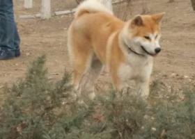 北京   通州瑞都公园悬赏一万元寻找黄白色大狗
