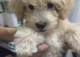 寻狗启示,寻找爱狗,请求大家帮忙,它是一只非常可爱的宠物狗狗,希望它早日回家,不要变成流浪狗。