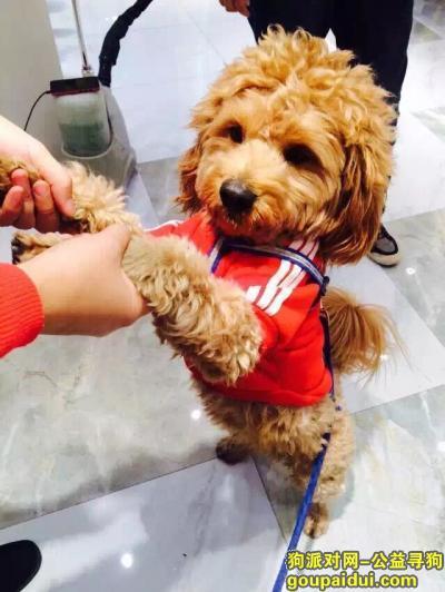 咸宁寻狗启示,在大广高速湖北咸宁燕厦服务区加油站旁边丢失贵宾犬,它是一只非常可爱的宠物狗狗,希望它早日回家,不要变成流浪狗。