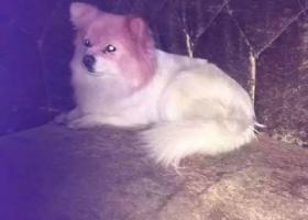 寻狗启示,联系电话:15857835788,它是一只非常可爱的宠物狗狗,希望它早日回家,不要变成流浪狗。