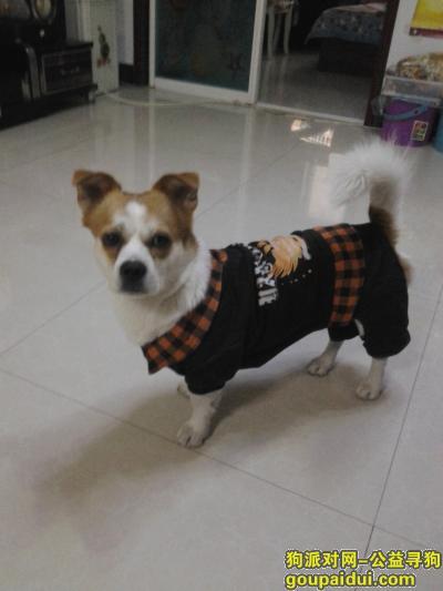 盘锦寻狗启示,盘锦市昆仑大酒店,寻狗,它是一只非常可爱的宠物狗狗,希望它早日回家,不要变成流浪狗。