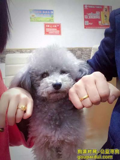 三门峡寻狗网,coco  你在哪 谢谢好心人,它是一只非常可爱的宠物狗狗,希望它早日回家,不要变成流浪狗。