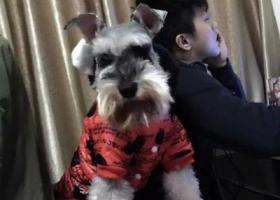 寻狗启示,寻狗启示。名叫汤小多,它是一只非常可爱的宠物狗狗,希望它早日回家,不要变成流浪狗。