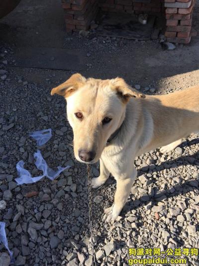 阜新寻狗,朋友们帮帮忙寻找我最爱的家人,它是一只非常可爱的宠物狗狗,希望它早日回家,不要变成流浪狗。