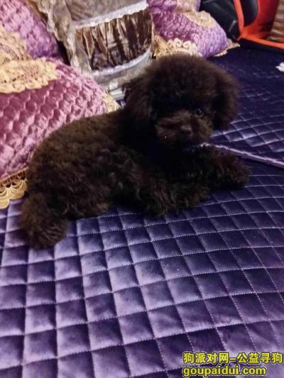 寻狗启示,吉林市 昌邑区雾凇中路寻找黑色泰迪,它是一只非常可爱的宠物狗狗,希望它早日回家,不要变成流浪狗。