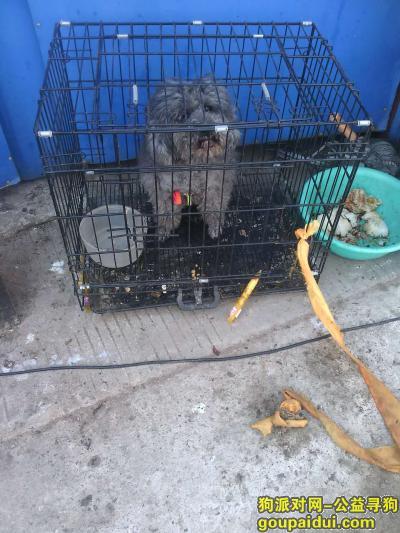 寻狗启示,狗狗寻找它的主人,望看到尽快联系,它是一只非常可爱的宠物狗狗,希望它早日回家,不要变成流浪狗。