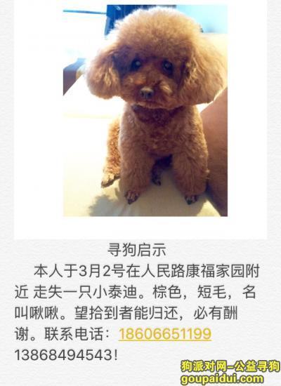 寻狗启示,3月2日晚 在龙港人民路 康福家园附近走失一只棕色泰迪,它是一只非常可爱的宠物狗狗,希望它早日回家,不要变成流浪狗。