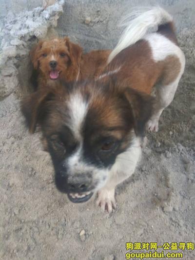 潮州找狗,寻找2只狗狗,急死了,它是一只非常可爱的宠物狗狗,希望它早日回家,不要变成流浪狗。