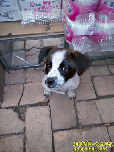 阜新寻狗网,寻找我最爱的宝贝,快回来吧!好想你,它是一只非常可爱的宠物狗狗,希望它早日回家,不要变成流浪狗。
