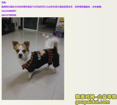 盘锦找狗,盘锦市大洼县田家镇,重金找寻我的狗儿,它是一只非常可爱的宠物狗狗,希望它早日回家,不要变成流浪狗。