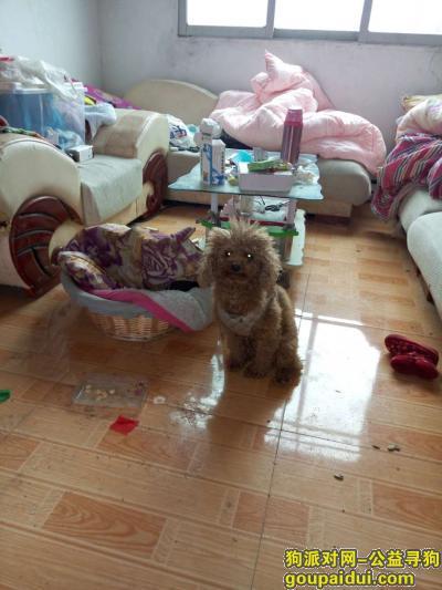 萍乡寻狗,求助,寻找走失的泰迪,它是一只非常可爱的宠物狗狗,希望它早日回家,不要变成流浪狗。