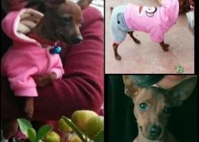 寻狗启示,枣庄市北庄镇寻找爱犬,它是一只非常可爱的宠物狗狗,希望它早日回家,不要变成流浪狗。