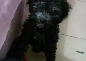寻狗启示,狗狗在3.6号,于中午11点多,在澄城县新川食府的那条巷子里跑丢了,它是一只非常可爱的宠物狗狗,希望它早日回家,不要变成流浪狗。
