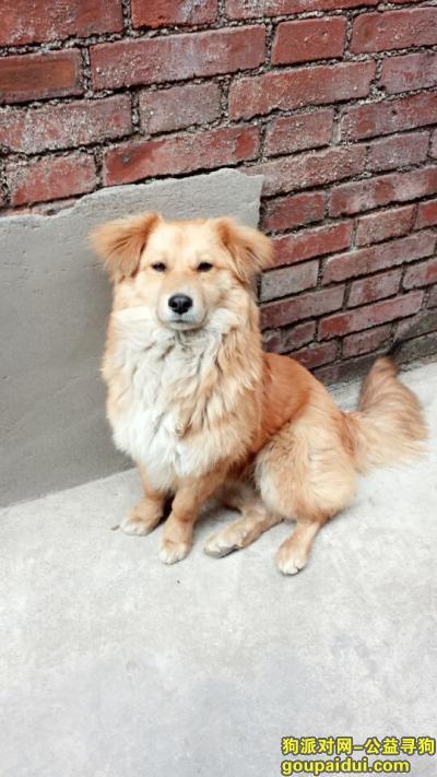 新乡捡到狗,紧急!!!紧急!!!寻找狗主人,它是一只非常可爱的宠物狗狗,希望它早日回家,不要变成流浪狗。