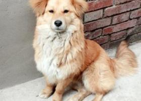 寻狗启示,紧急!!!紧急!!!寻找狗主人,它是一只非常可爱的宠物狗狗,希望它早日回家,不要变成流浪狗。