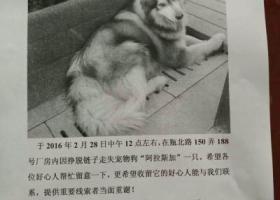 上海  闵行区颛桥瓶北路酬谢一万元寻找阿拉斯加