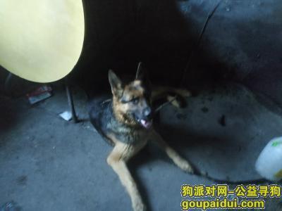 辽阳找狗,我捡着一条狗谁的快领,它是一只非常可爱的宠物狗狗,希望它早日回家,不要变成流浪狗。