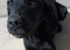 寻狗启示,有看的好心人请联系我  必有重谢!,它是一只非常可爱的宠物狗狗,希望它早日回家,不要变成流浪狗。