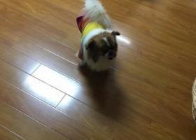 南京下关区幕府佳园小区寻找爱犬