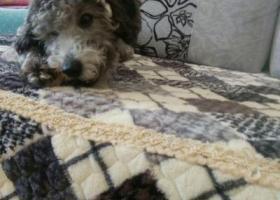 寻狗启示,.爱狗受到惊吓丢失,求好心人见到能联系。,它是一只非常可爱的宠物狗狗,希望它早日回家,不要变成流浪狗。