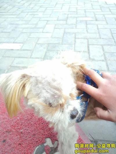 池州找狗,狗狗来福,公狗 于2016.3.19日失踪,它是一只非常可爱的宠物狗狗,希望它早日回家,不要变成流浪狗。