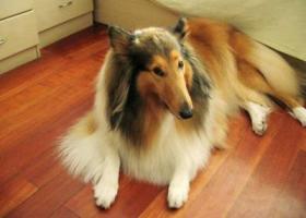 寻狗启示,3.17号晚,五点左右华庄工业园区,它是一只非常可爱的宠物狗狗,希望它早日回家,不要变成流浪狗。